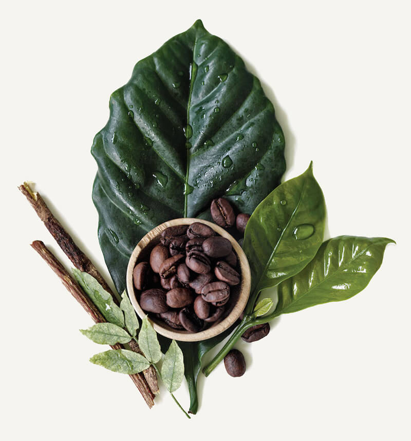 Aveda Botanical Kinetics Ingredients